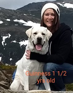 white lab Guinness on vacation