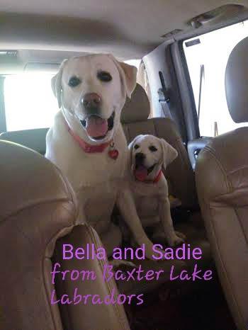 Bella and Sadie - White Labs