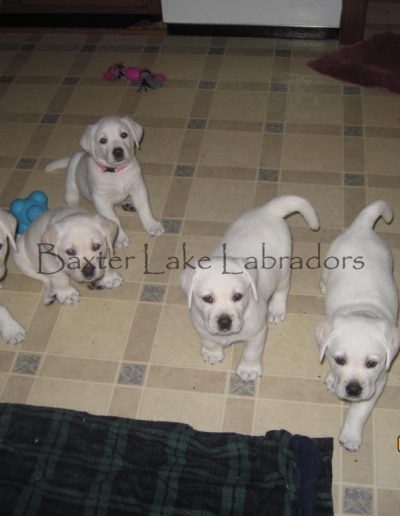 Mikkos litter of 5