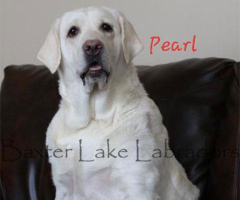Baxter Lakes Labradors - Pearl