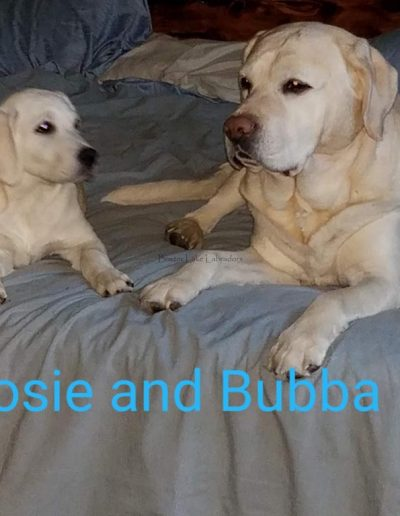 Rose & Bubba Buddies